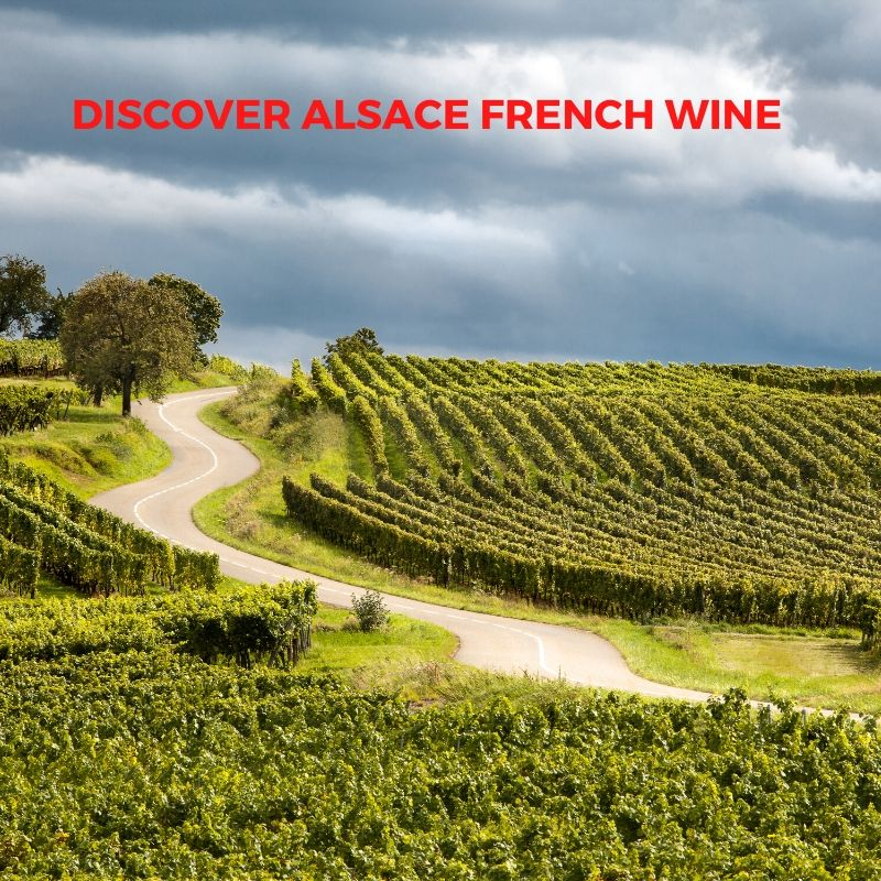 Introduction to French Wine In Alsace Fom Domain Charles Frey
