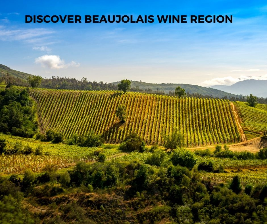 Introduction To Beaujolais Wine Region