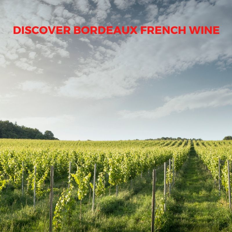 Introduction to French Wine In Bordeaux From Les Hauts de Tousqiron, Chateau Piron and Chateau L'Escadre