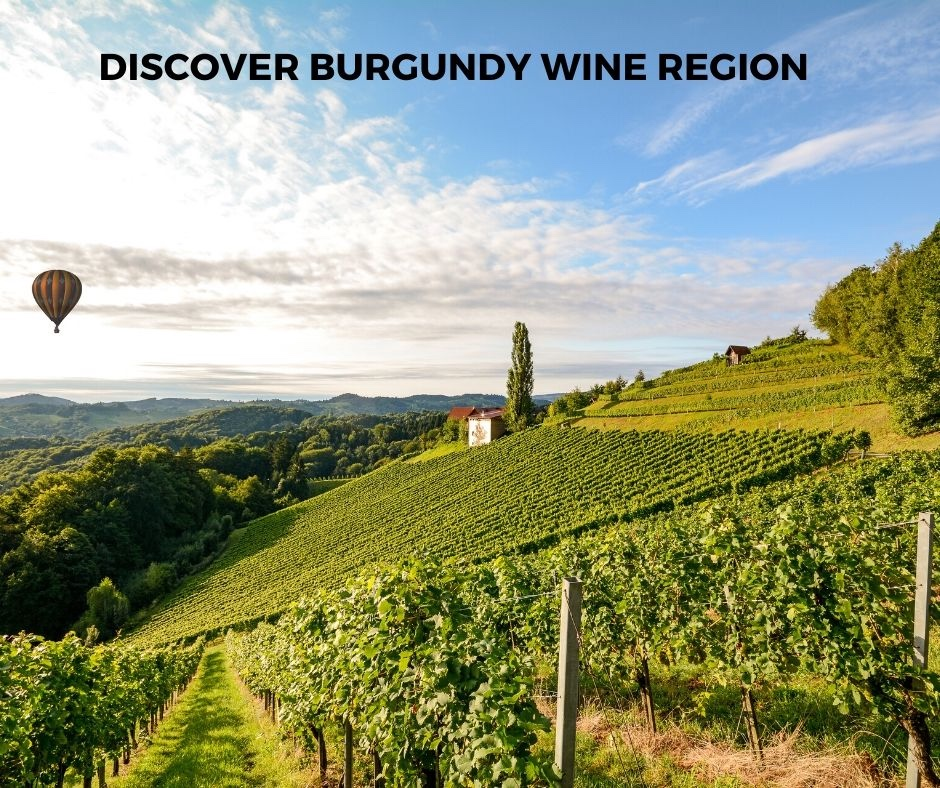 Introduction To Bourgogne (Burgundy) Wine Region