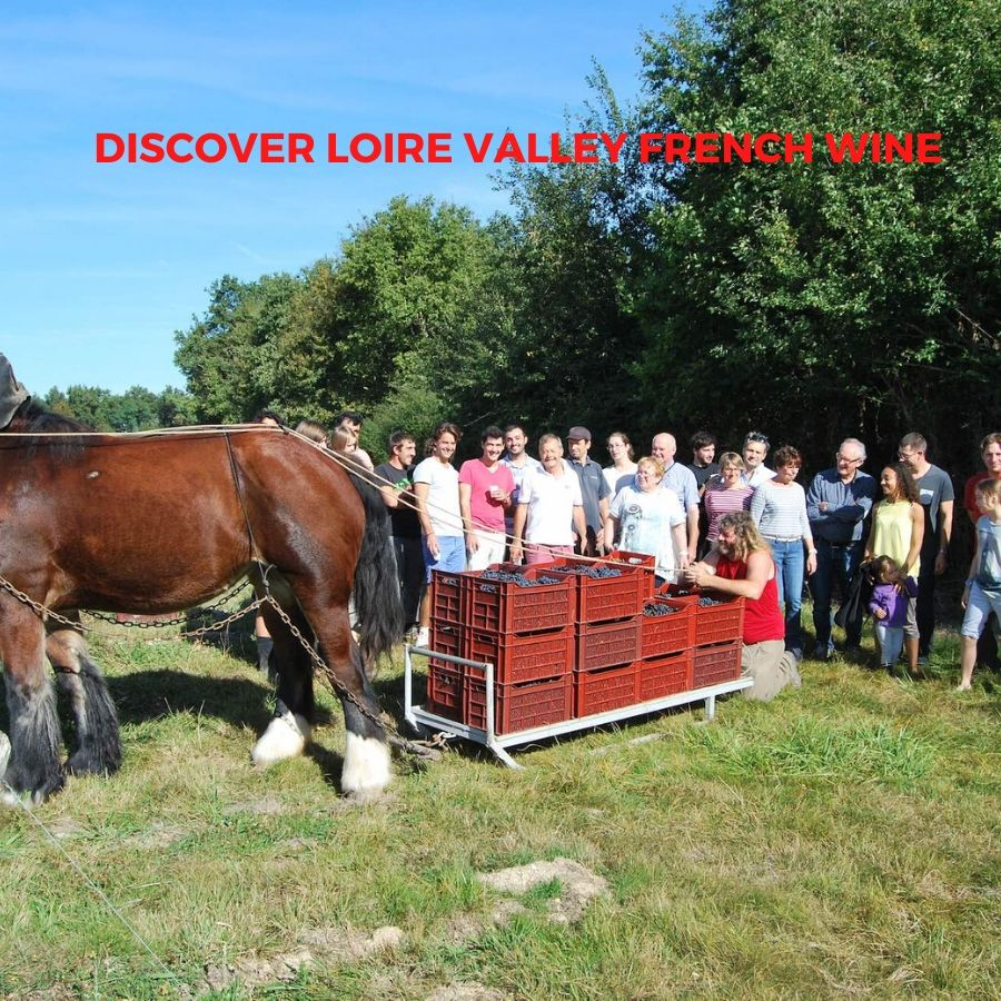 Introduction to French Wine In Loire Valley From Domaine Desroches-Mancois
