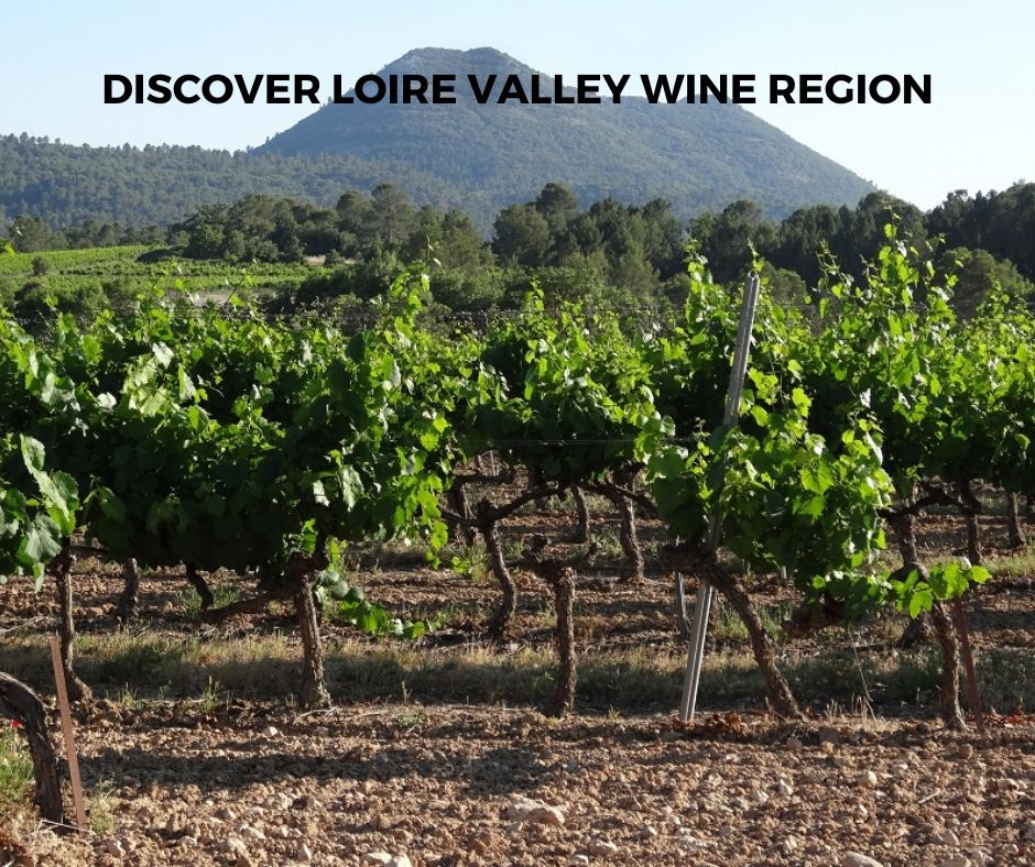 Introduction To Loire Valley Wine Region