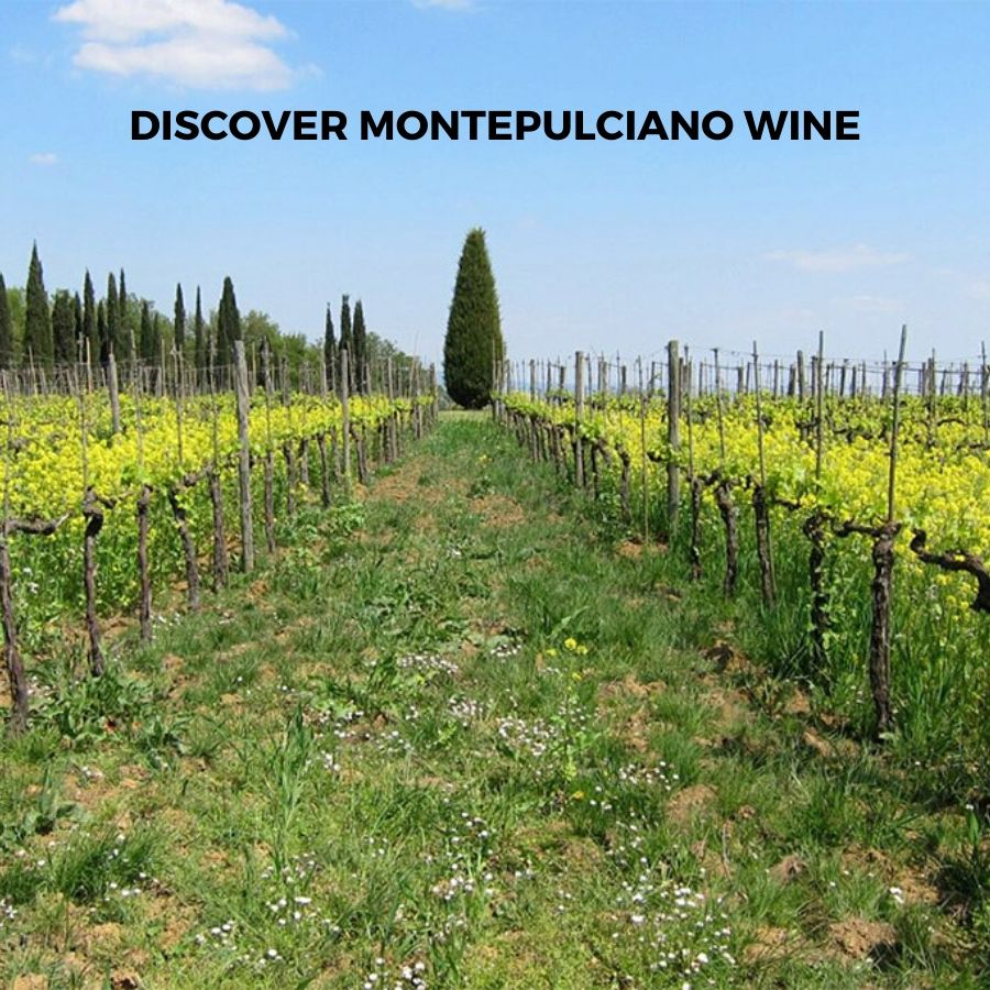 Introduction to Italian Montepulciano Wine