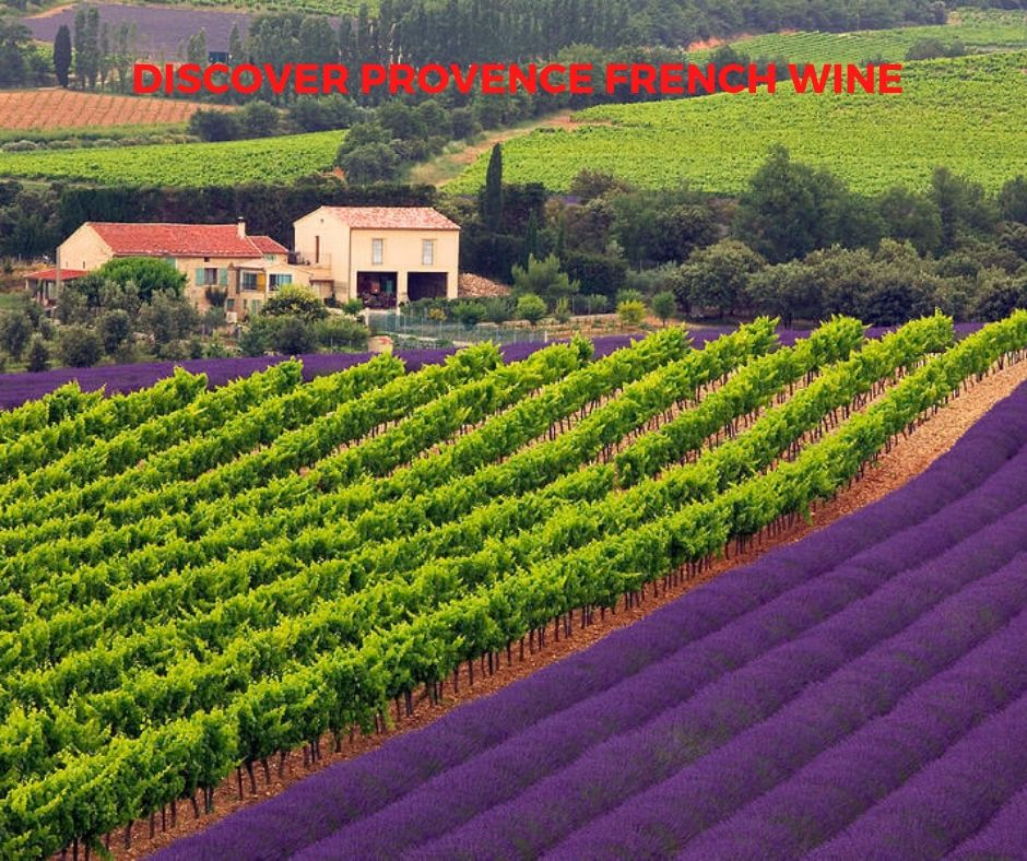 Introduction to French Wine In Provence From Domaine Pieracci