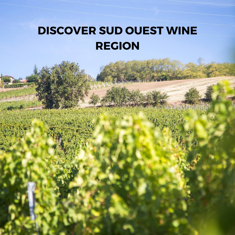Introduction to Sud Ouest (South West) Wine Region And French Wine From L'Enclos des Braves, Chateau de Hauterive