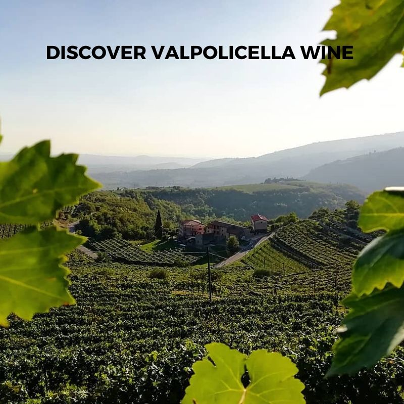 Introduction to Italian Valpolicella Wine from Classico, Ripasso to Amarone